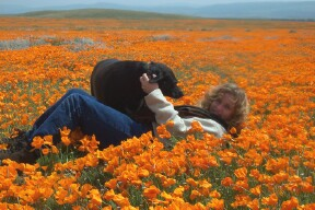 In the california poppy fields